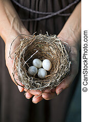 hands holding nest with eggs - nest with eggs in woman\'s...