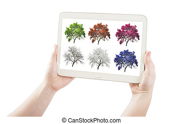 hands holding pc tablet with set of season tree isolated on white.