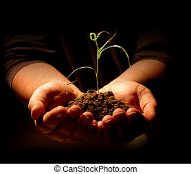 Male hands holding small sapling on dark background