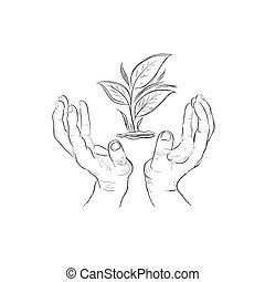 hands holding plant, sketch style