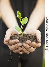 Hands holding seedleng - Hands holding little green plant...