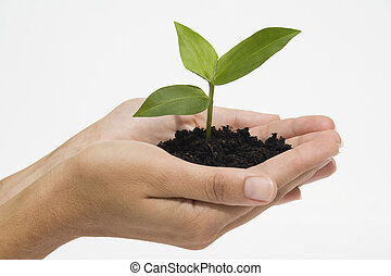 Hands holding seedling - Hands holding young plant against...
