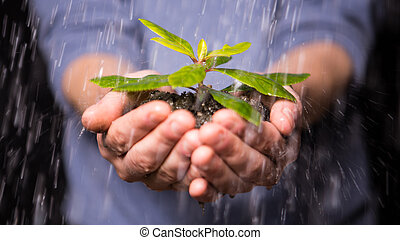 Hands holding seedling in the rain promoting ...