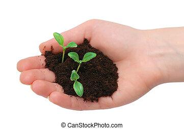 Hands holding seedling isolated on  white background
