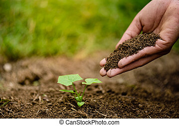 Hands holding soil to plant a young tree. Earth Day concept.