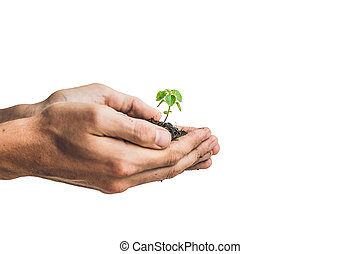 Hands holding young green plant, Isolated on white. The concept of ecology, environmental protection