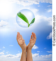 Hands holding young plant in a bubble