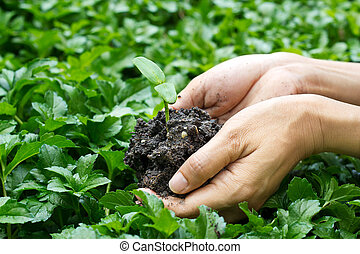 hands holding young plant on green nature background, seeding plant