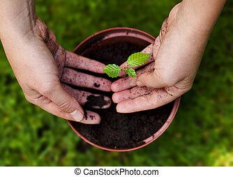 hands in soil, spring gardening