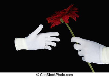 Hands in white gloves with a red flower