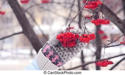 Hands in woolen mittens, touch the red mountain ash,...