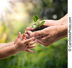 hands of a child taking a plant from the hands of a man -...