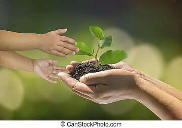 hands of a child taking a plant