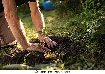 Hands of elderly horticulturist working in backyard - Side...