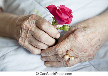 Hands of elderly lady with rose, - Series of photos: 92...