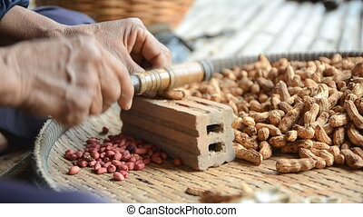 Hands of old woman to crack Pea nut shell with ambient sound...
