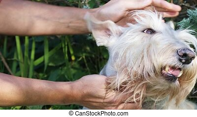 Hands of owner petting a dog - Women's hands stroking the ...