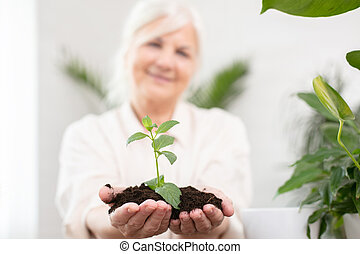Hands of senior woman holding and caring a young green plant.