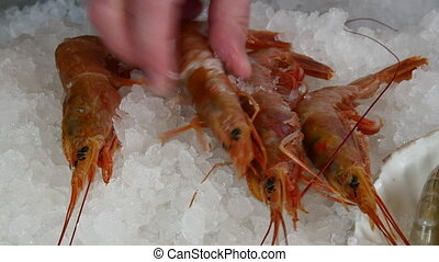 Hands of the cook superimpose fresh shrimp on ice in a...