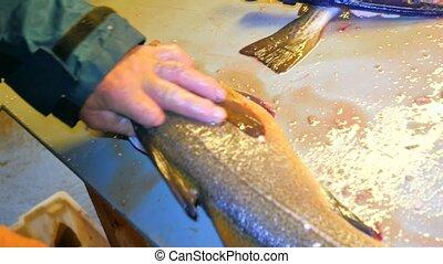 Hands of worker cleaning and filleting fresh caught sea fish...