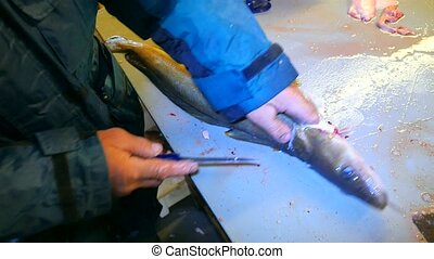 Hands of worker gutting Common ling, the ling fish (Molva...