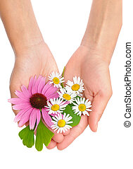 Hands of young woman holding herbs - echinacea, ginkgo, ...