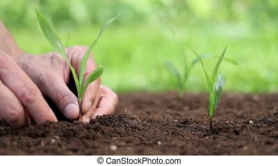 hands planting a seed and Watering
