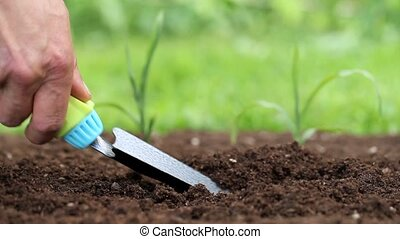 hands planting a seedling in ground - hands planting a...