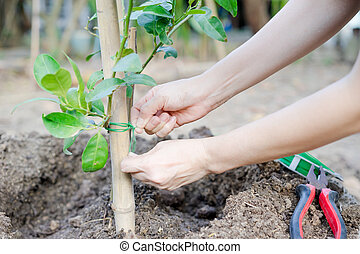 hands planting a tree
