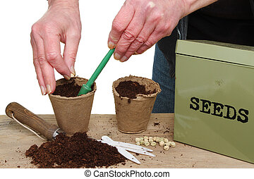 Hands planting seeds