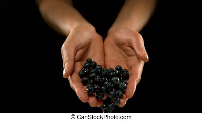 Hands pouring blueberries 4k - Hands pouring blueberries ...