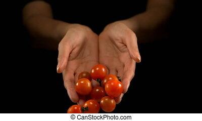 Hands pouring tomatoes 4k - Hands pouring tomatoes against ...