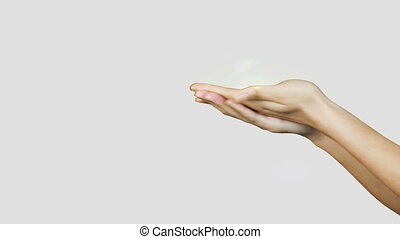 Hands presenting digital plant
