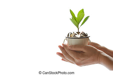 Hands protect growing plant of coins represented saving money growing up. Business, finance and banking concept