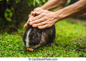Hands protect rabbit. Cosmetics test on rabbit animal. Cruelty free and stop animal abuse concept