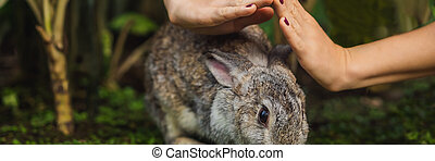 Hands protect rabbit. Cosmetics test on rabbit animal. Cruelty free and stop animal abuse concept BANNER, LONG FORMAT