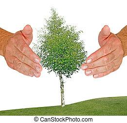 Hands protecting birch tree