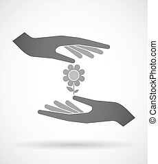 Hands protecting or giving a flower