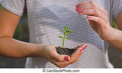 Hands protecting small plant - Human hands holding green...