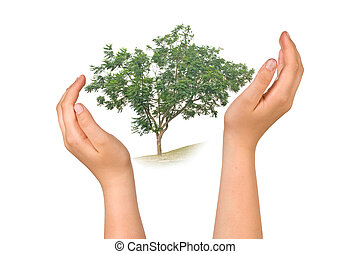 Hands protecting tree