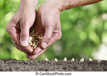 hands sowing seeds in the vegetable garden soil, close up on green background