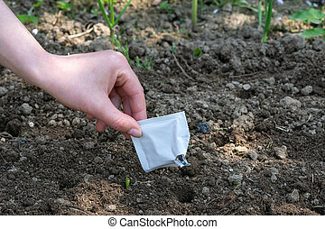 Hands sowing seeds into the soil in the vegetable garden. Spring gardening.