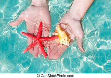 Hands starfish and seashell in tropical water