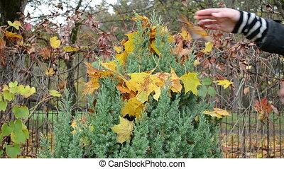 hands take leaves flower