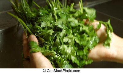 Hands wash parsley and dill. Water flowing onto fresh...