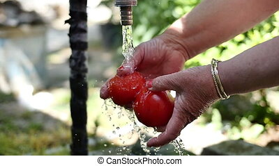 Hands washing tomatoes under water