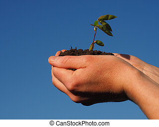 Hands with a growing plant