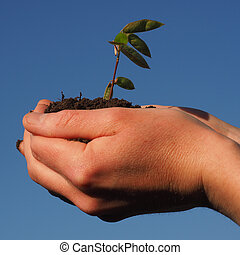 Hands with a small plant