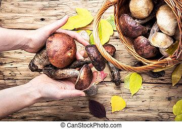 harvest of forest mushrooms