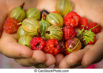 Hands with delicious wild berries and raspberries
